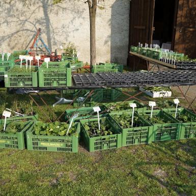 Markt der Erde Parndorf, Von Ei bis Pflanzerei